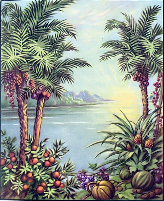 Image Result For God Created Plants